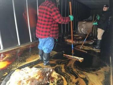 Molasses Spill