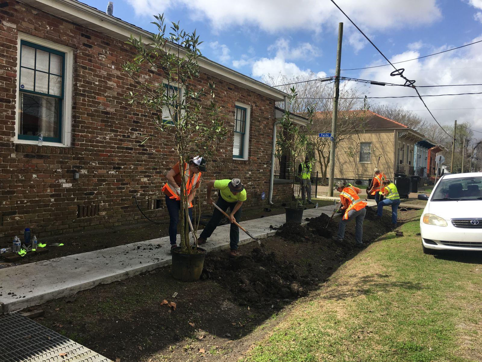 SOUL Tree Planting Sidewalk